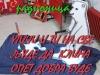 FB_IMG_1509751913040